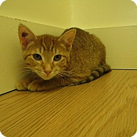 Adopt A Pet :: Fable - Milwaukee, WI