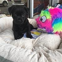 Adopt A Pet :: Fiona - Monticello, GA