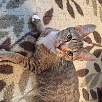 Adopt A Pet :: Chelsea (LE) - Little Falls, NJ