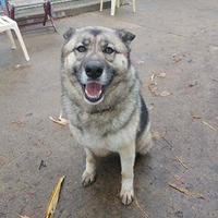 Adopt A Pet :: Princess - Aberdeen, SD