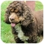 Photo 2 - Cocker Spaniel Dog for adoption in Mahwah, New Jersey - Beau