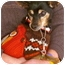Photo 1 - Miniature Pinscher/Chihuahua Mix Dog for adoption in Linden, New Jersey - Oscar