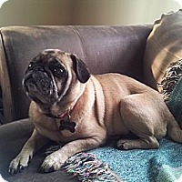 Adopt A Pet :: Tiffany - Middlesex, NJ