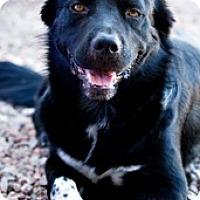 Adopt A Pet :: Duke - Only $65 adoption fee! - Litchfield Park, AZ