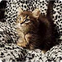 Adopt A Pet :: Zephyr - Spencer, NY