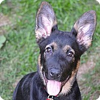 Adopt A Pet :: Bailey- I love people and dogs - Redondo Beach, CA