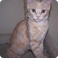 Adopt A Pet :: K-Traci1-Gingersnap - Colorado Springs, CO