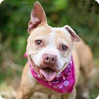 Adopt A Pet :: Merlot - Portland, OR