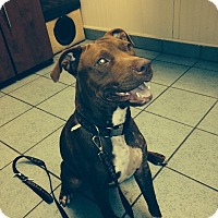 Adopt A Pet :: Maxie - Houston, TX