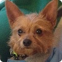 Adopt A Pet :: Spider - Orlando, FL