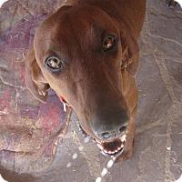 Adopt A Pet :: Ellijay - Santa Fe, NM