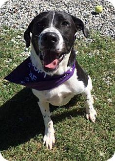 Border Collie Mix Dog for adoption in Greensboro, North Carolina - Martie