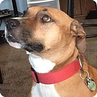 Adopt A Pet :: Sweet Bailey 2017 (m/c) - Chesterfield, MI