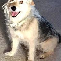 Adopt A Pet :: Olive - Scottsdale, AZ