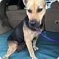 Adopt A Pet :: Jasmine - Seattle, WA