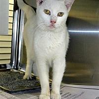 Adopt A Pet :: Moscato - Indiana, PA