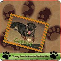 Adopt A Pet :: Caprice - Elyria, OH