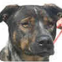 Adopt A Pet :: Duncan-courtesy post - Scottsdale, AZ