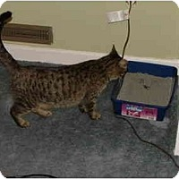 Adopt A Pet :: Progotta - East Tawas, MI