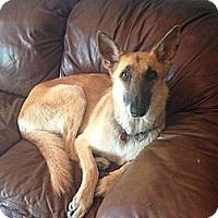 Adopt A Pet :: Miss Scarlett - Hamilton, MT