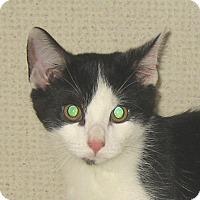 Adopt A Pet :: FRANKIE - 2014 - Hamilton, NJ