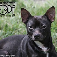 Adopt A Pet :: Oreo - Godfrey, IL