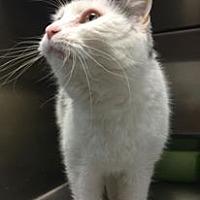 Adopt A Pet :: Storm - La Grange Park, IL