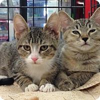 Adopt A Pet :: DeeDee - Redondo Beach, CA