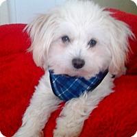 Adopt A Pet :: Max - Princeton, KY