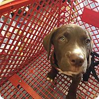 Adopt A Pet :: Murphy - Lockhart, TX