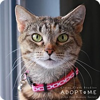 Adopt A Pet :: Lucy - Edwardsville, IL