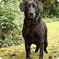 Adopt A Pet :: Nanna - Dripping Springs, TX