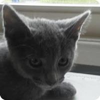 Adopt A Pet :: Shea - Columbus, OH