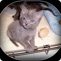 Adopt A Pet :: Korey - South Plainfield, NJ