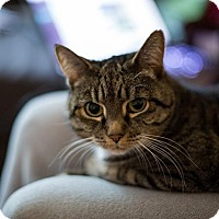 Adopt A Pet :: Charlee - Vancouver, BC