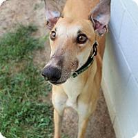 Adopt A Pet :: Texas - Randleman, NC