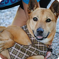 Adopt A Pet :: JUNO - Linden, NJ