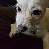 Adopt A Pet :: Whisper - Carlsbad, CA