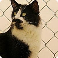 Adopt A Pet :: Destiny - Chico, CA