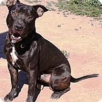 Adopt A Pet :: Lucker - Gilbert, AZ