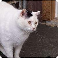 Adopt A Pet :: Chevron - Quilcene, WA