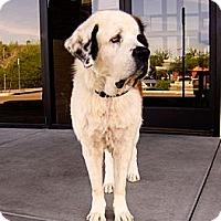 Adopt A Pet :: MAZY - Glendale, AZ