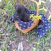 Adopt A Pet :: Male # 7 - Roaring Spring, PA