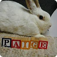 Adopt A Pet :: Paige - Newport, DE