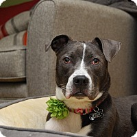 Adopt A Pet :: Farrah - Emmett, MI