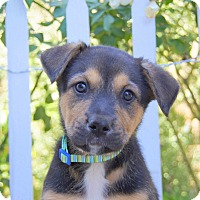 Adopt A Pet :: Matty von Portia - Thousand Oaks, CA