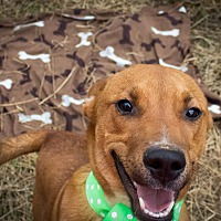 Adopt A Pet :: Scooter - Kingston, TN