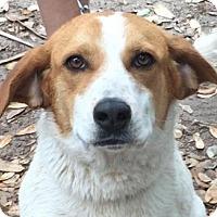 Adopt A Pet :: Sweetie (Sparky) - Orlando, FL