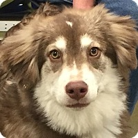 Adopt A Pet :: Willow#4F (Piper) - Orlando, FL