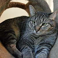 Adopt A Pet :: Rocky Road - Middletown, NY